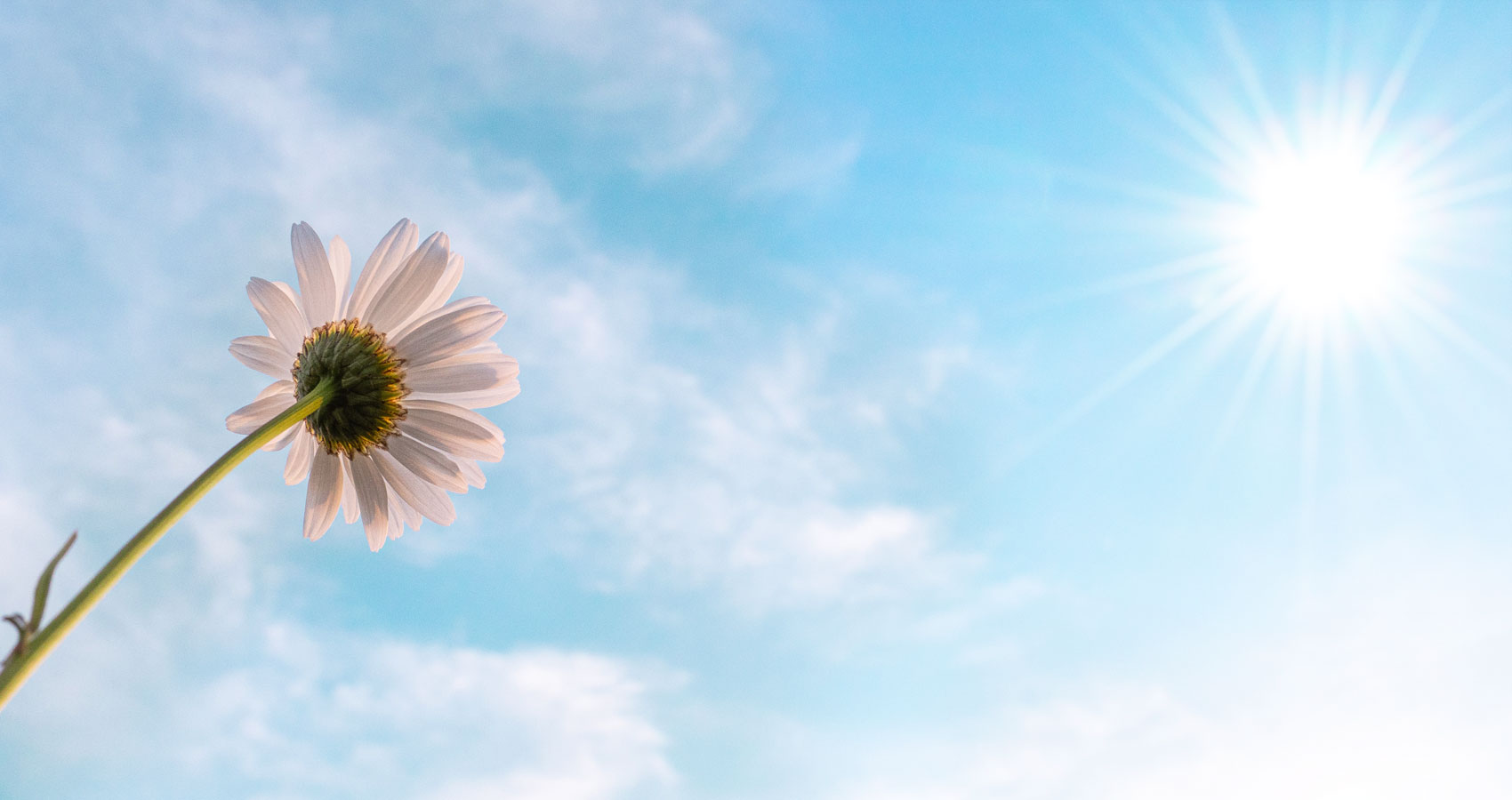 The Flower and The Sun, short story by Grace McHale Spillwords.com