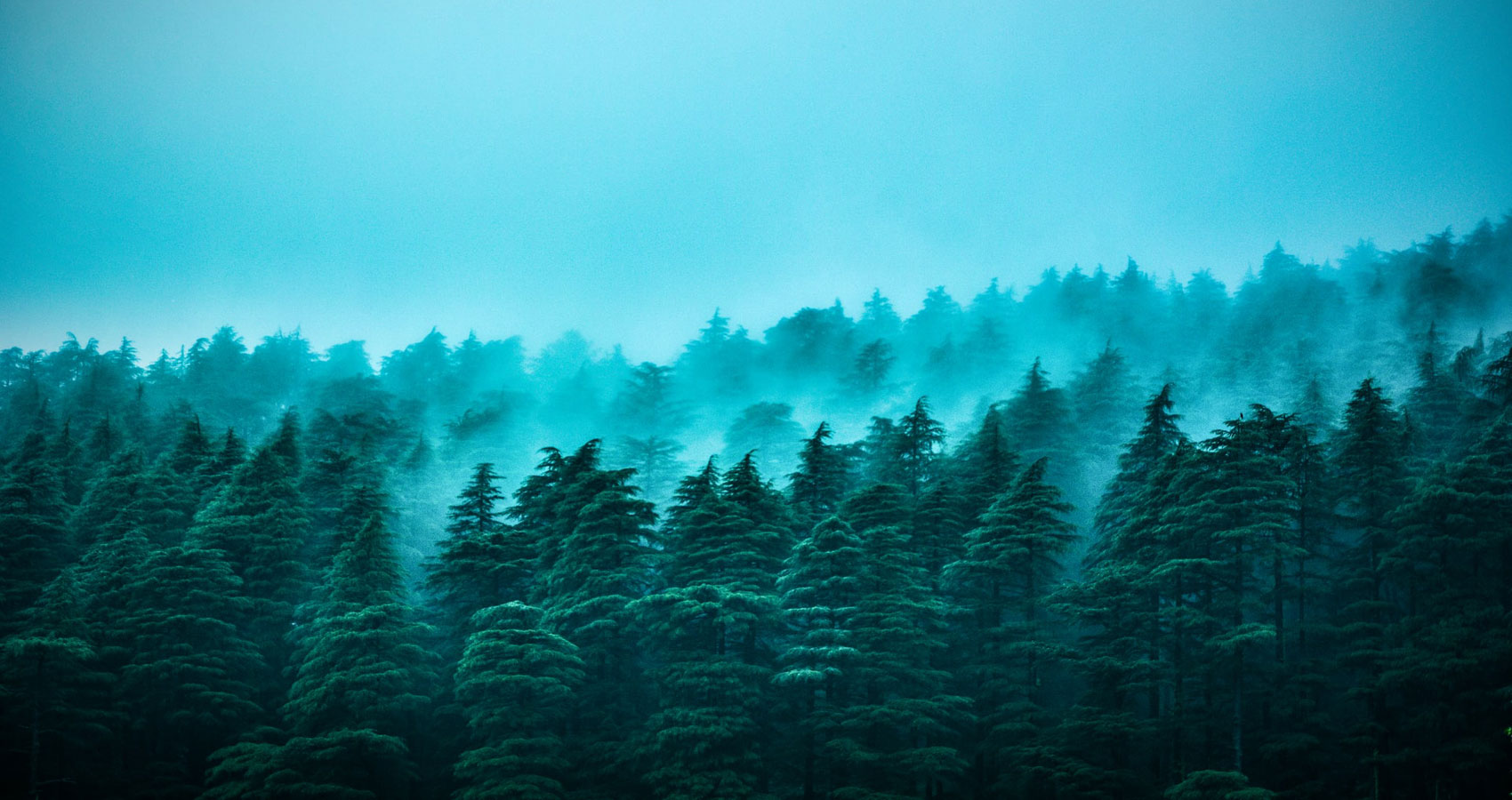 Blue Pines, a poem written by Scott Thomas Outlar at Spillwords.com