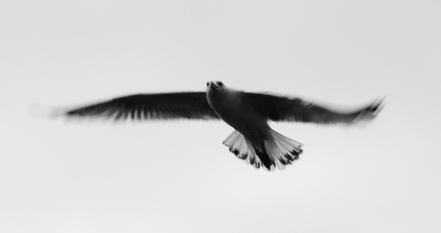 The Bird, a poem written by Christina Ciufo at Spillwords.com