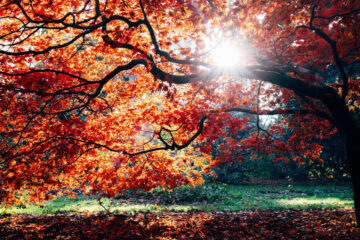 Autumn, poetry written by Pritika Bhatt at Spillwords.com