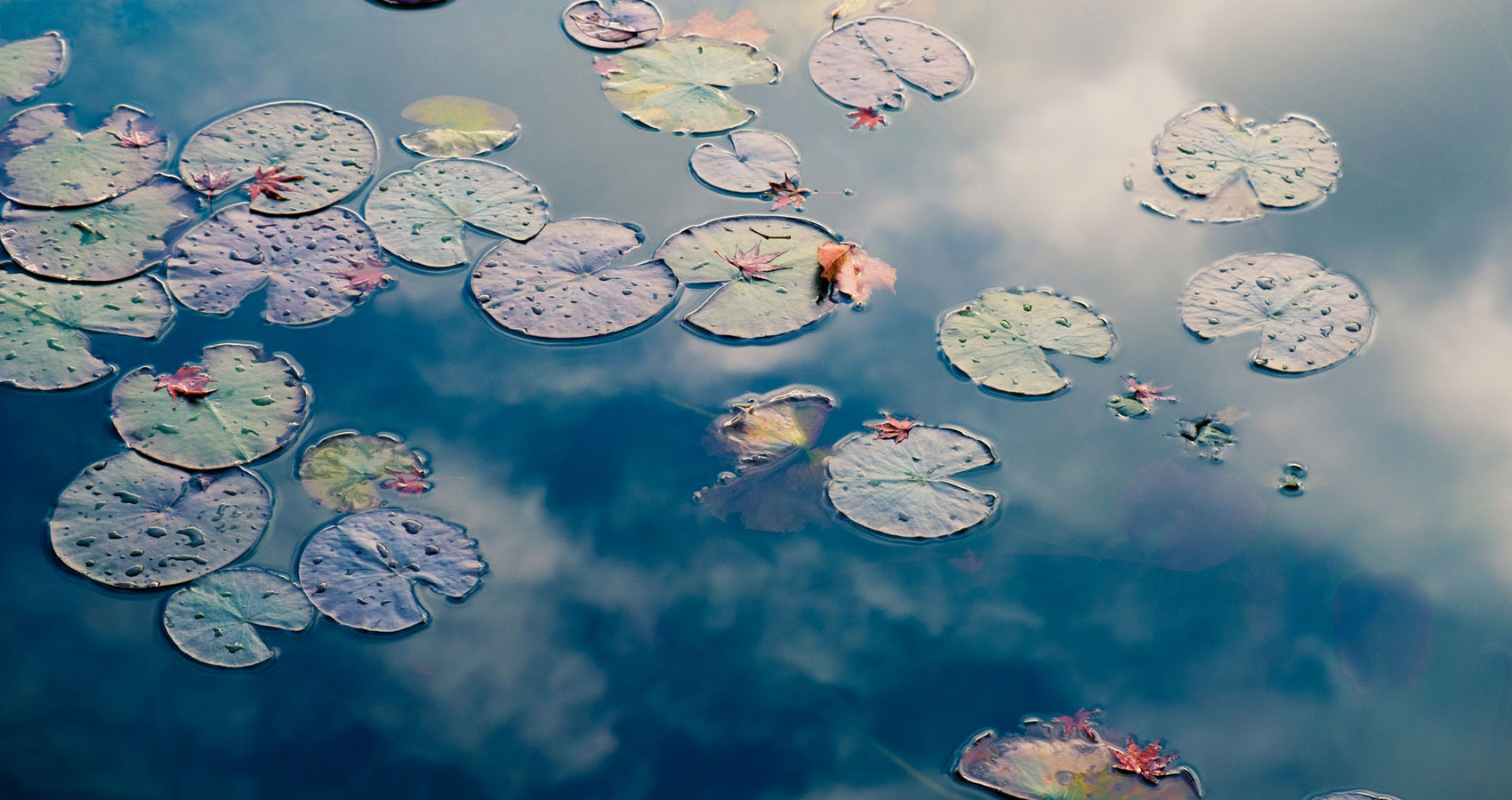 POND II - 9.9.19, poetry written by John L. Stanizzi at Spillwords.com