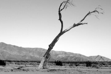 Poisoned Trees And Yellow Grass, an excerpt by Karen Clark at Spillwords.com