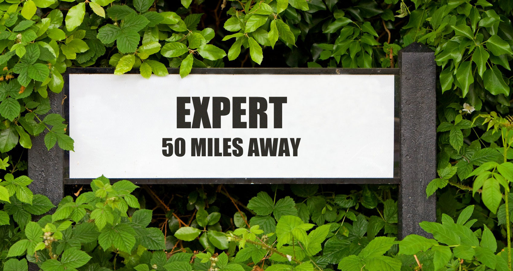 Expert From Fifty Miles Away, story by Anita G. Gorman at Spillwords.com