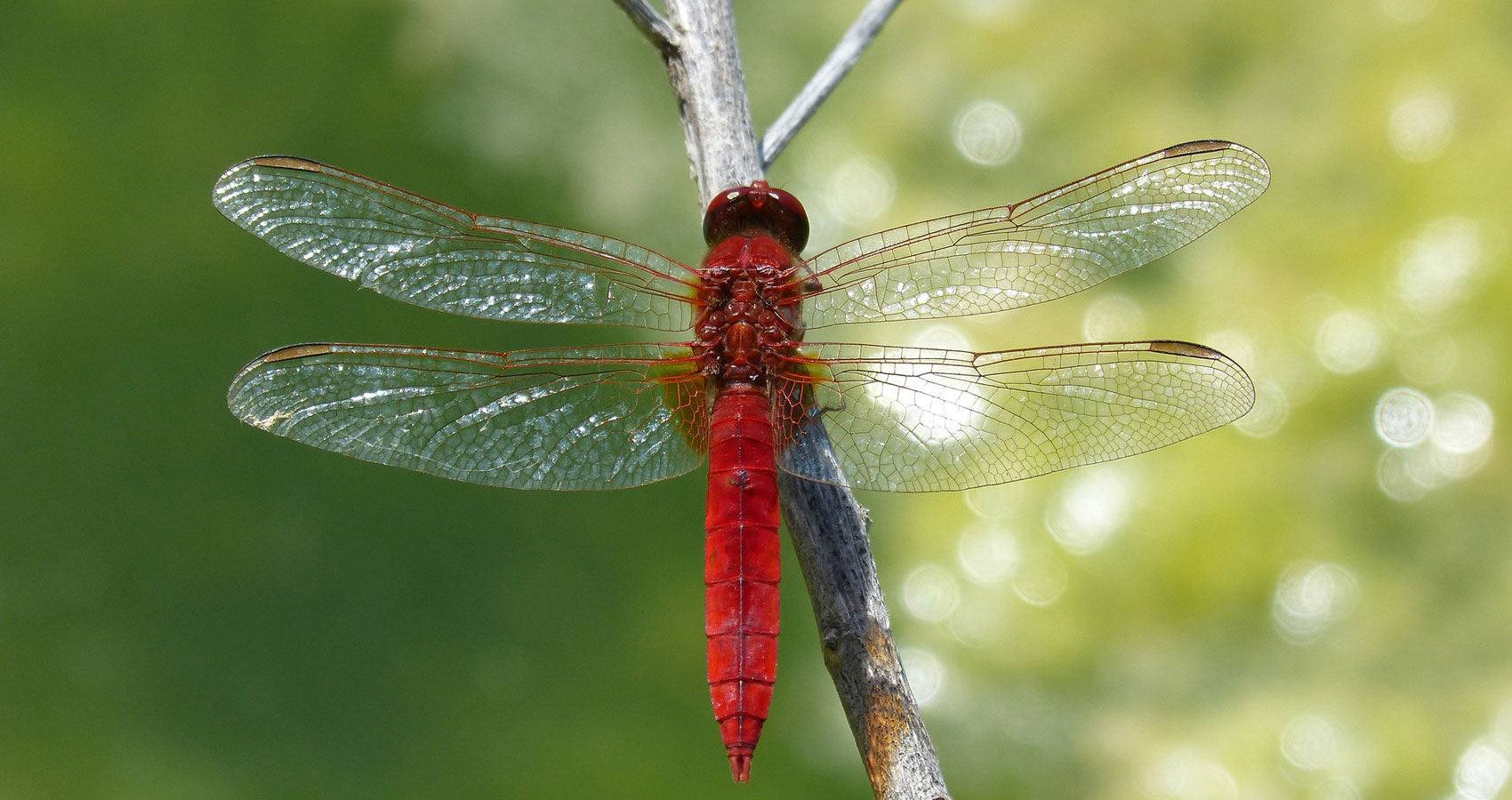 The Magic of The Dragonfly: Poetry in Motion at Spillwords.com