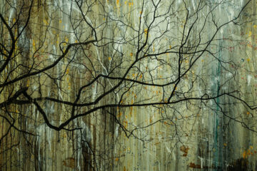Willow Tree, a short story by Michal Reibenbach at Spillwords.com
