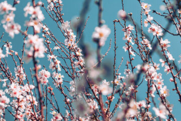 A Sure Sign of Spring, haiku by Linda Marie Hilton at Spillwords.com