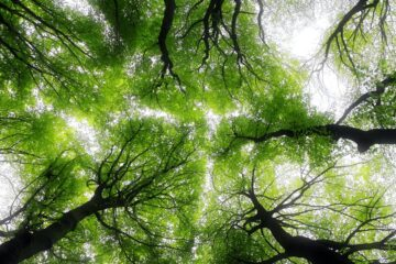 Green Shield, a poem written by Jim Bellamy at Spillwords.com
