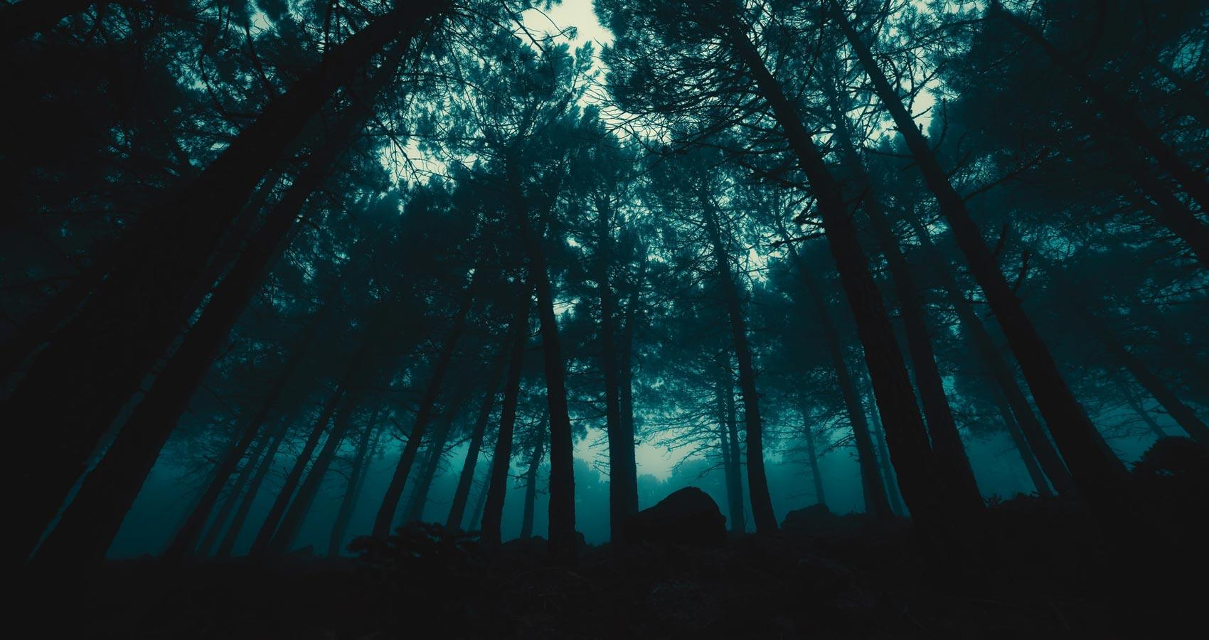 Naturaleza En Concierto, prose by José A Gómez at Spillwords.com