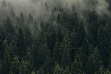 The Monster In The Pine Forest, story by Lynne Phillips at Spillwords.com