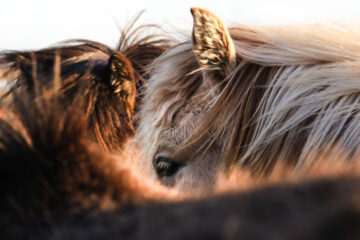 Wild Horses, poetry written by Edward Donnelly at Spillwords.com