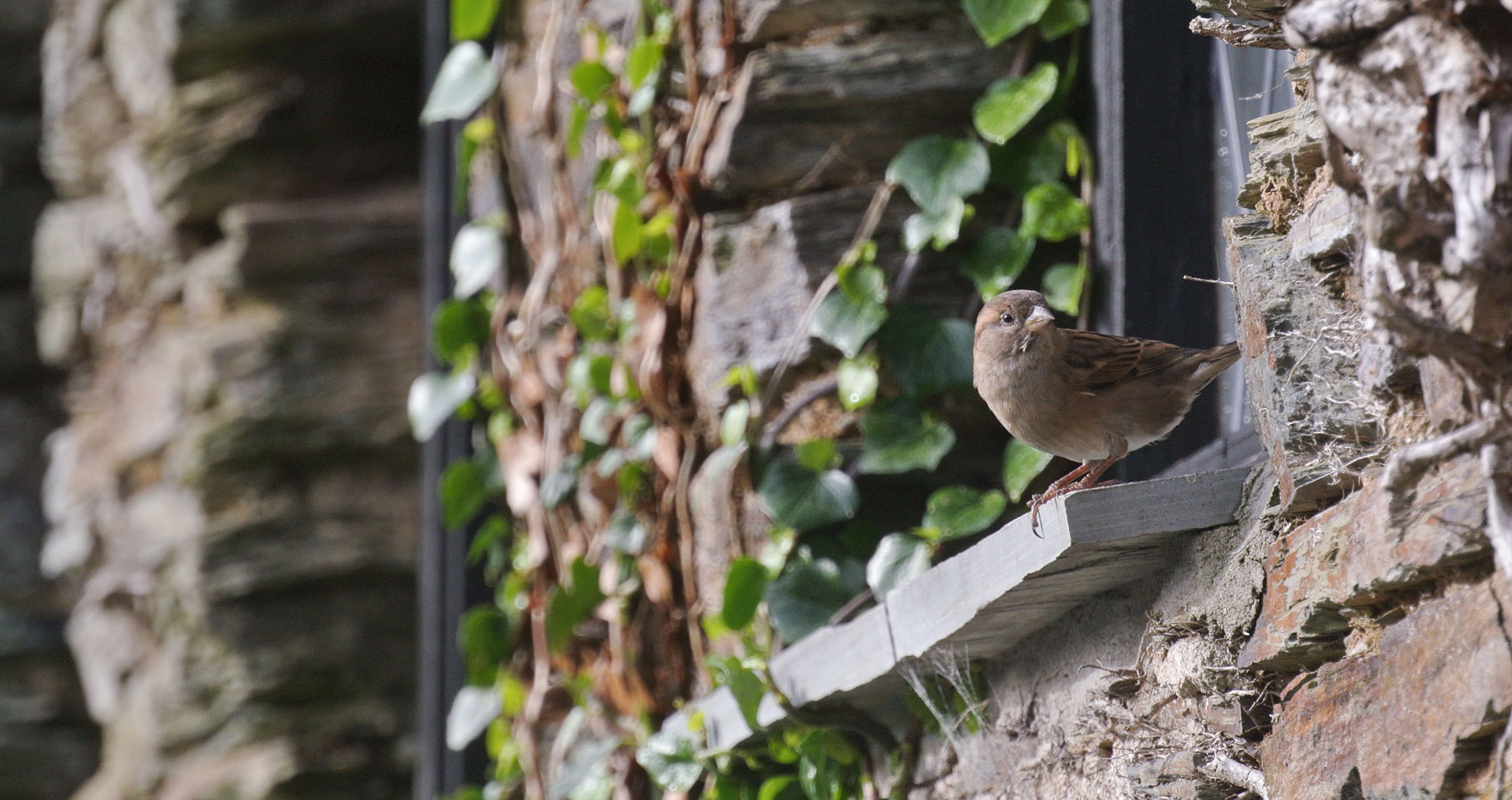 A Bird Landed On My Window, a poem by Eric Danhoff at Spillwords.com