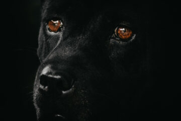 The Bark of The Black Dog, poetry by Patrick Doran at Spillwords.com