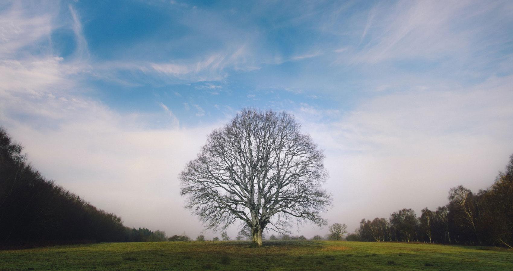 Trees, a poem written by Joyce Kilmer at Spillwords.com