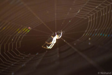 A Spider's Saga, poetry by Nishand Venugopal at Spillwords.com