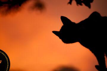 A Samhain Sequence, poetry by Linda Marie Hiltonat Spillwords.com