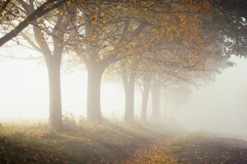 Impressions of a Misty Morning, a poem by Gabriela Docan at Spillwords.com