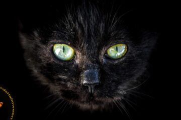 The Cat Accursed, poetry by Sandi Leibowitz at Spillwords.com
