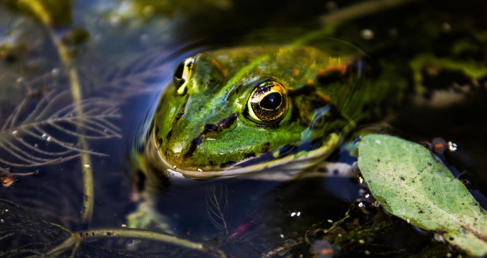 The Frog, a poem by Christina Rossetti at Spillwords.com