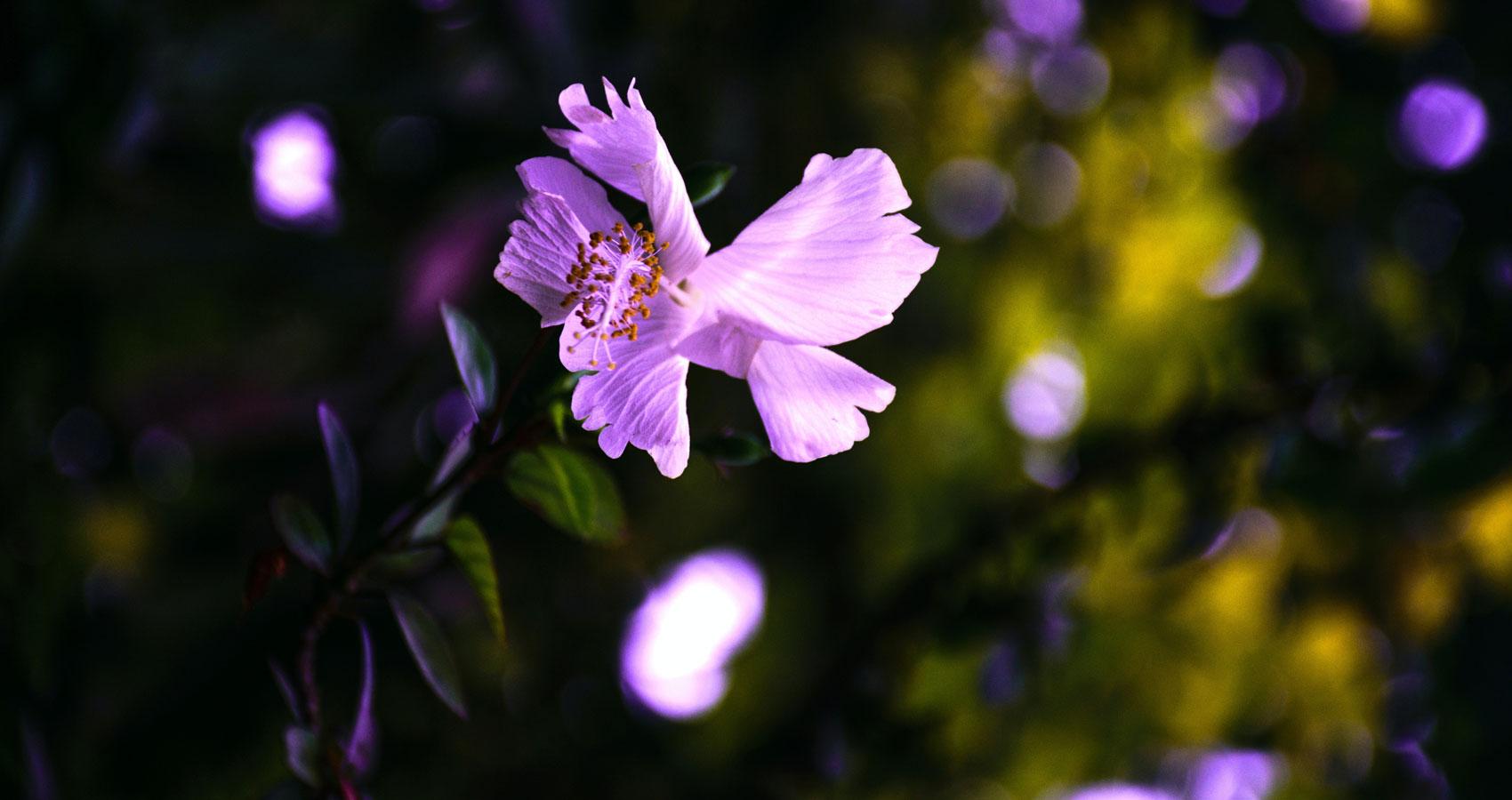The Gardener's Flowers, a poem by Nattie O'Sheggzy at Spillwords.com