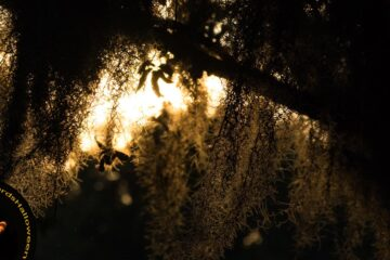 The Mystery of the Weeping Willow on Halloween, short story written by Mary Bone at Spillwords.com