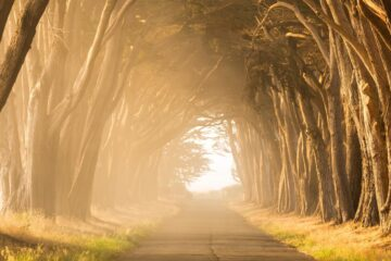 The Route Home, a poem written by LadyLily at Spillwords.com