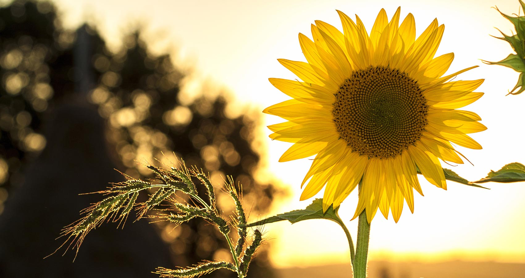 The Sun, The Flower and The Splendor, a poem by Mahroz at Spillwords.com