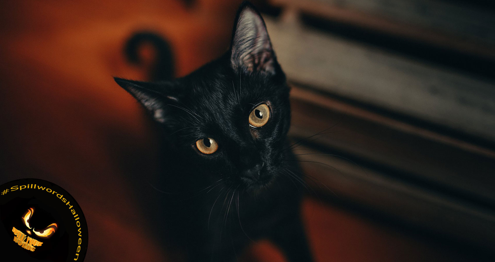 Witches Cats, a poem by Jaya Avendel at Spillwords.com