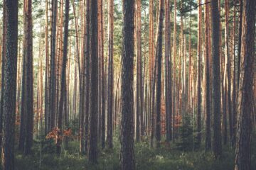 A Treeless Life, a poem written by Anne G at Spillwords.com