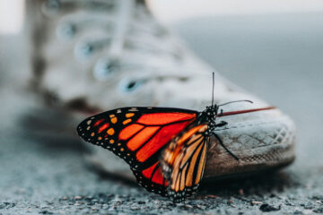 Butterflies, a poem written by John Drudge at Spillwords.com