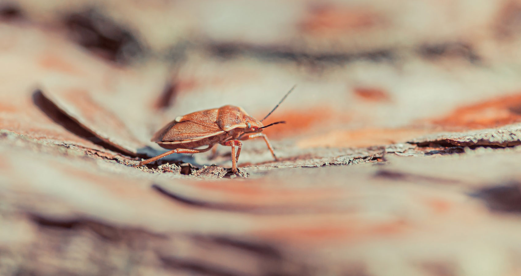 Cockroach, a short story written by Andrew Scobie at Spillwords.com