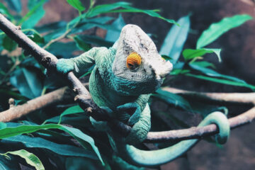 Chameleon Stereotypes, poetry written by Tinashe Muza at Spillwords.com
