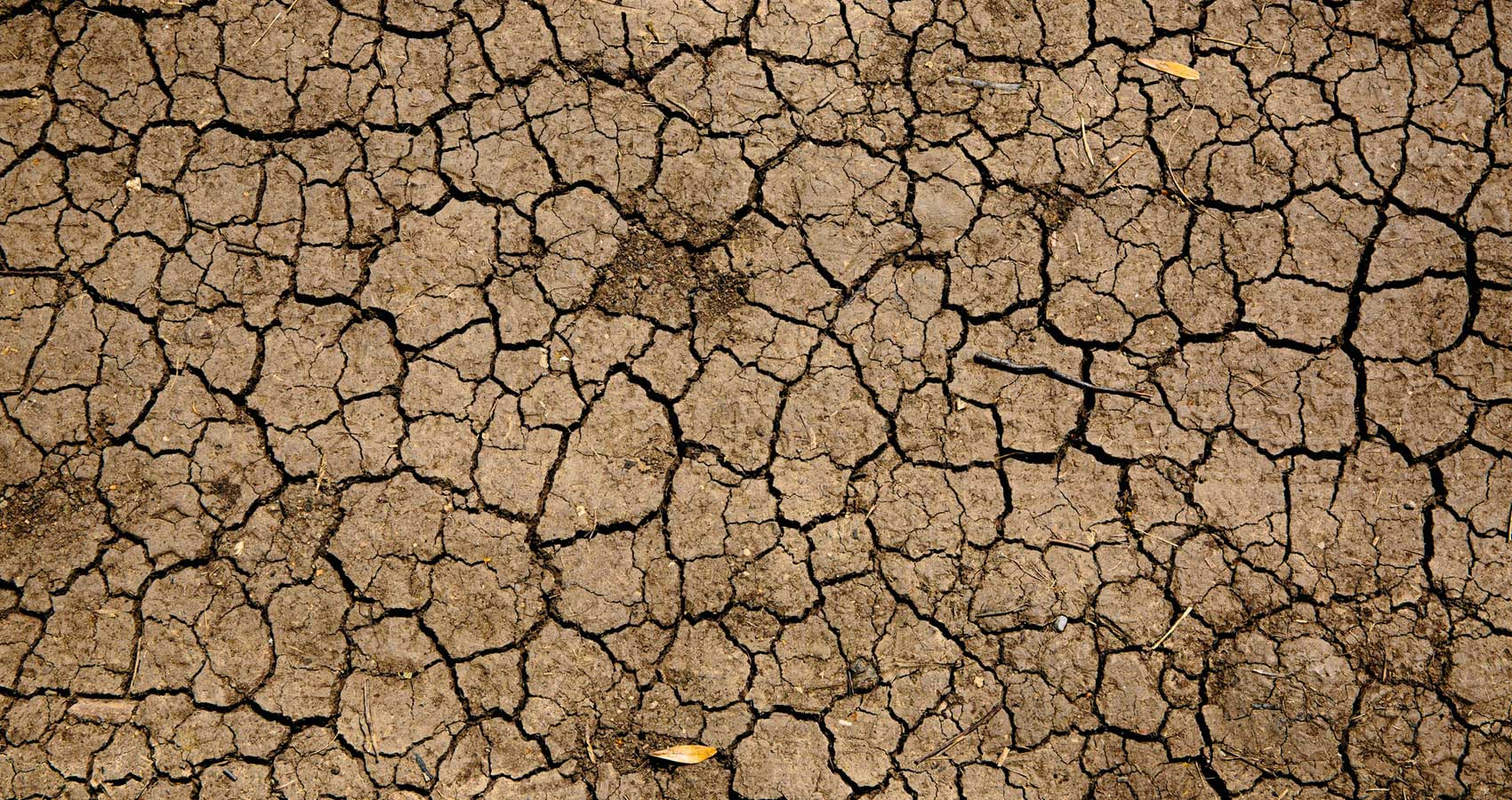 Drought, micropoetry written by Padmini Krishnan at Spillwords.com