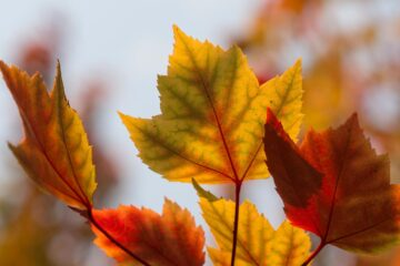 Fall, a poem written by Leila Ziari at Spillwords.com