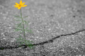 Seen, a haiku written by Cindy Medina at Spillwords.com
