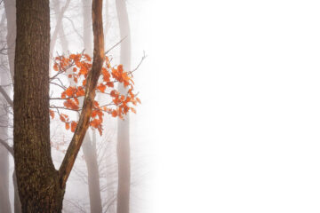 Autumn's Fall, poetry by Tammi Fitzpatrick at Spillwords.com