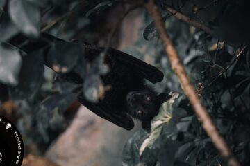 Bats and Their Thoughts, poem by Nishand Venugopal at Spillwords.com