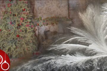 Christmas Blooms Flowers, poem by Linda M. Crate at Spillwords.com