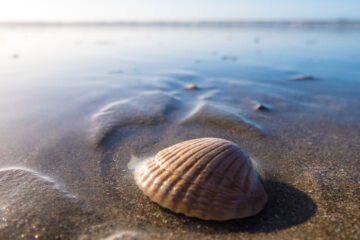 Just A Shell Story, a poem by Emalisa Rose at Spillwords.com