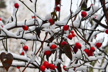 O This Day Inside an Autumn-Xmas Mind? written by Jim Bellamy at Spillwords.com