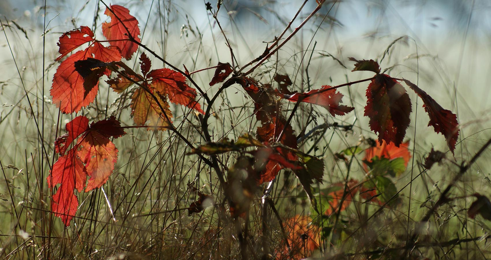 On Father Turning Eighty in November, poetry by Sally Delancy at Spillwords.com
