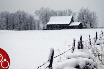 The Actual Date of Christmas, story by Wendy Palmer at Spillwords.com