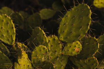 Nopales, poetry written by Maria J. Estrada at Spillwords.com