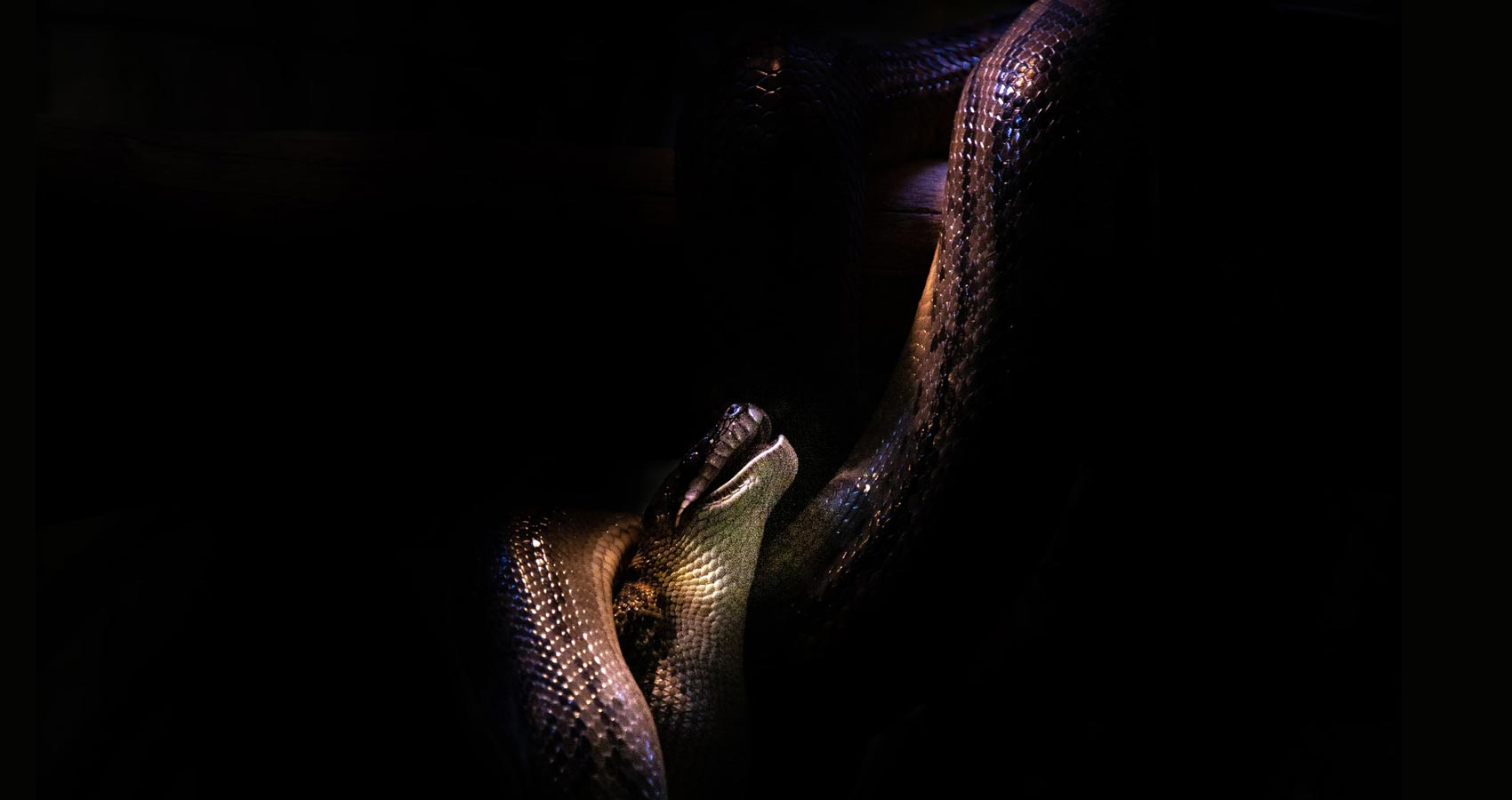 Tomorrow There Is A Snake, short story by S.C. Denton at Spillwords.com