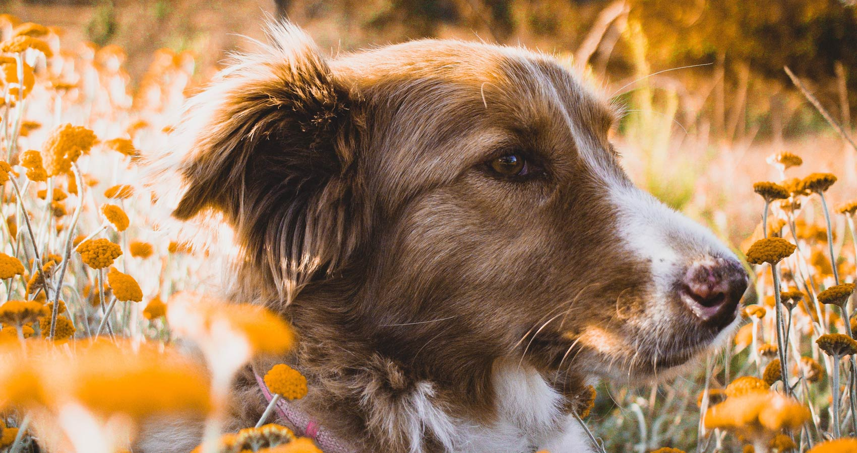 Dogs of March, a poem written by Huntersjames at Spillwords.com
