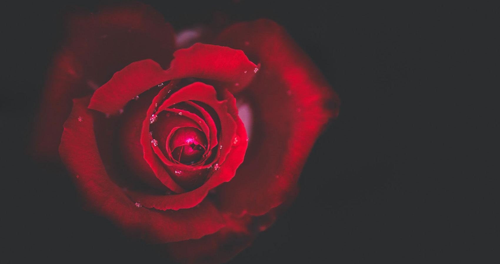 Carpe Diem, a poem by Amrita Valan at Spillwords.com