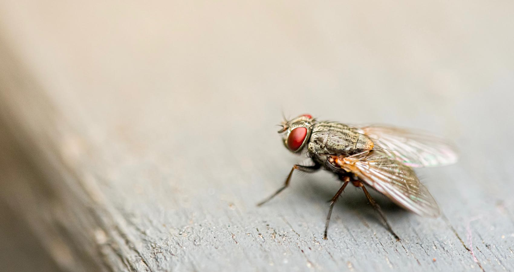 Merely A Fly, a poem written by Jane Briganti at Spillwords.com