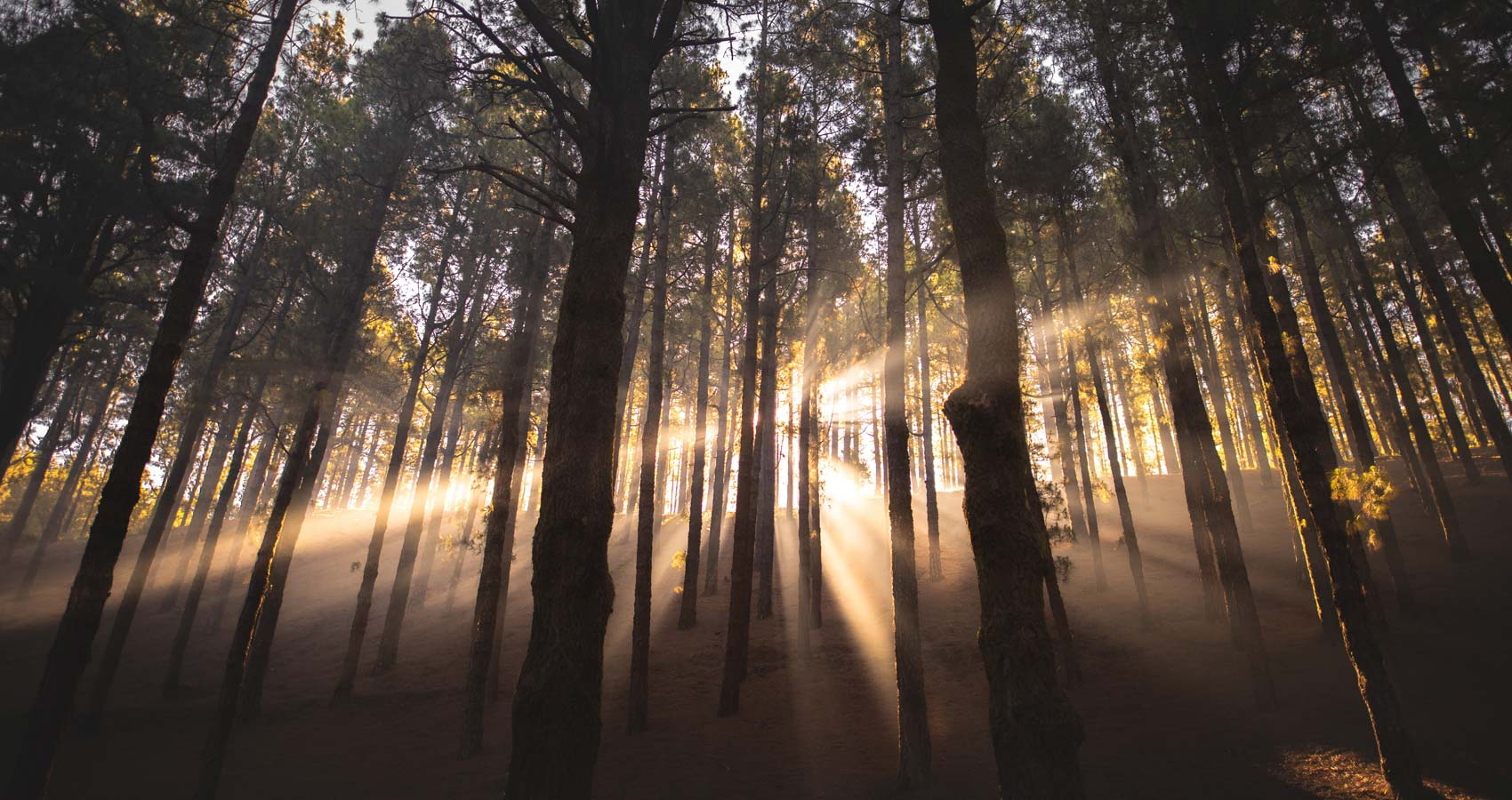 The Day Woods/The Still Night, poem by Julian Mann at Spillwords.com