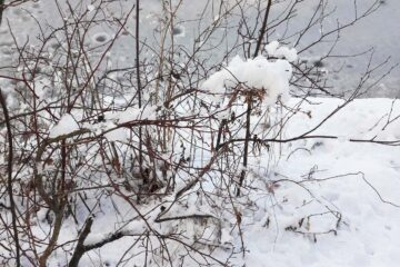 Three Dreams of Winter, a poem by Meg Smith at Spillwords.com