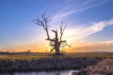 In Between the Roots and the Stars, poetry by Katherine E. Soto at Spillwords.com