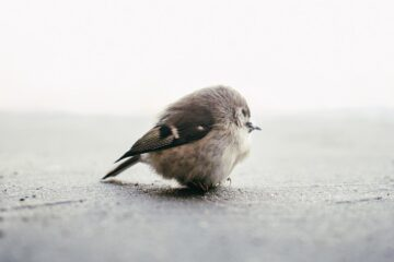 The Little Sparrow, a short story by Nafisa Shabbir at Spillwords.com